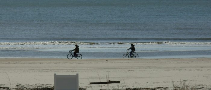 Bike Riders on Beach in Front of Two Palms