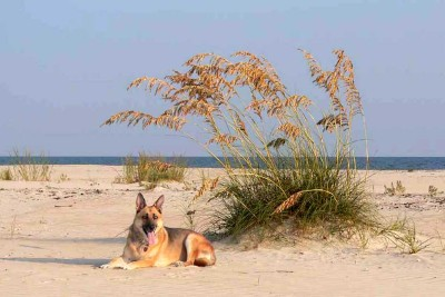 Pet Friendly Beaches and Vacation Rentals-Two and Three Palms