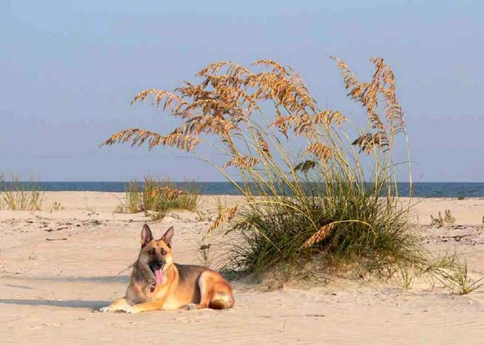 Cape San Blas-One of the Only Pet Friendly Beaches in the U.S.