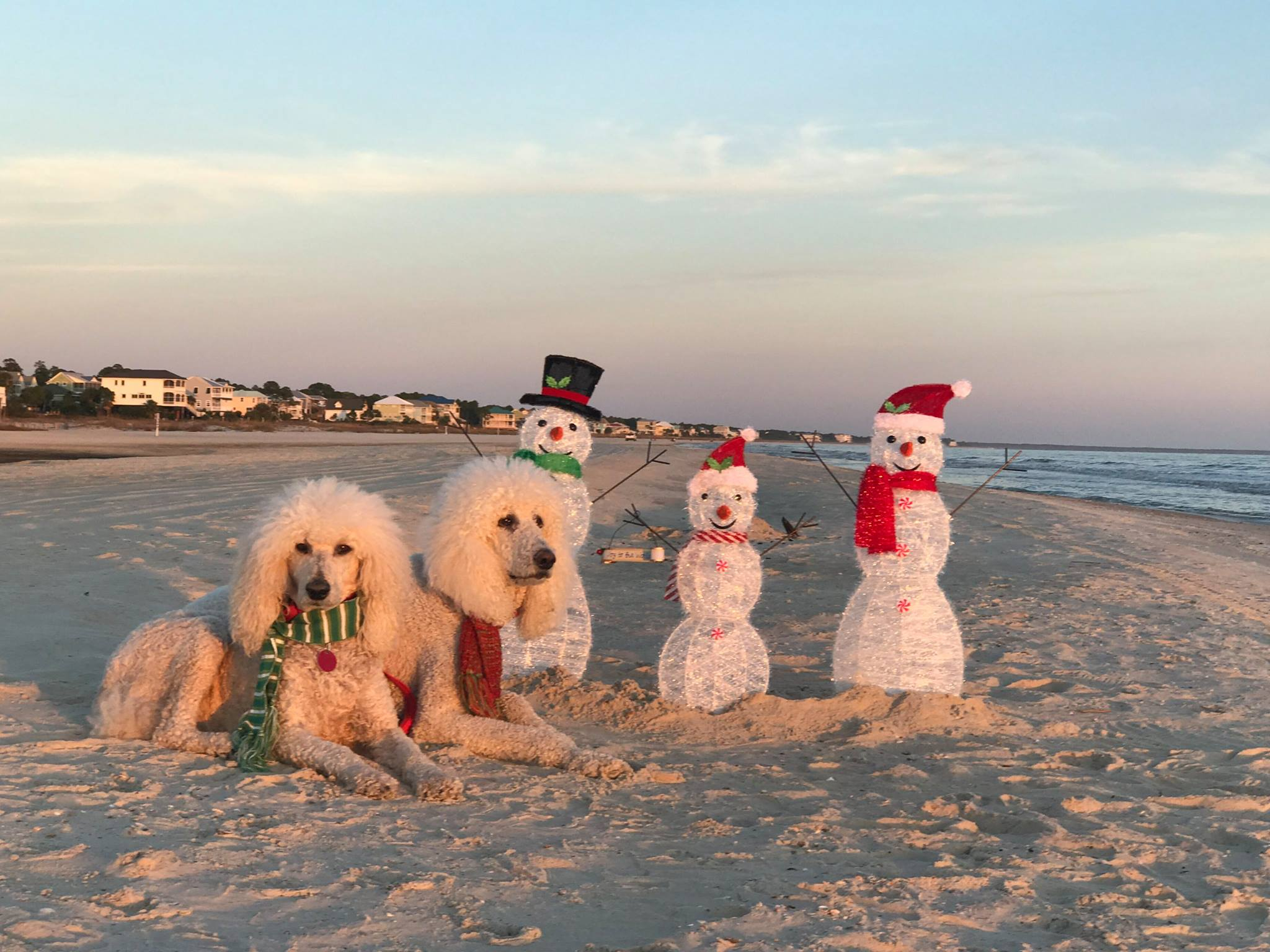 florida friendly exteriorpoint vacation beach seacrest cottages seagrove rentals cottage dog pet in